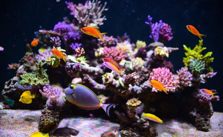 tropical-fish-exhibit_1