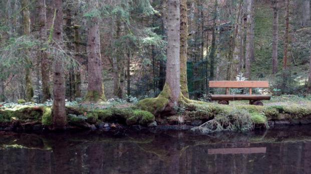 Weiher im Wald
