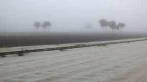 Knoblauchsland im Nebel
