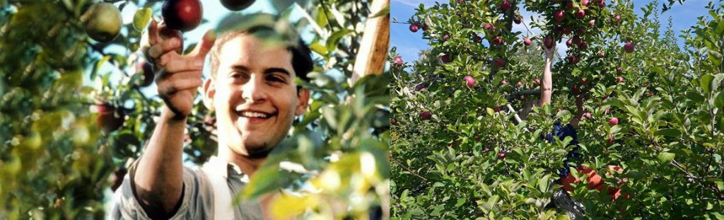 cider-house-rules-apple-picking