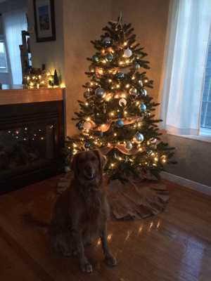 Penny and the Christmas tree