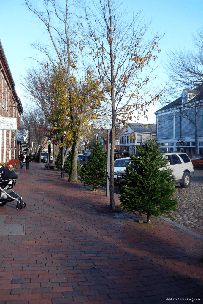 Nantucket Christmas trees