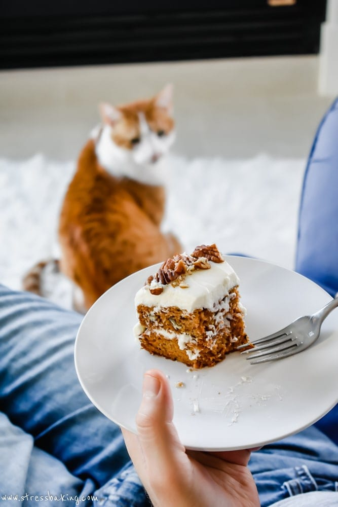 Cat wants carrot cake