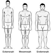 Mens 3 different body types