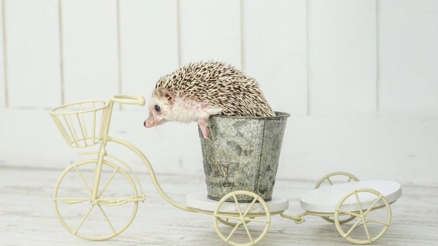 自動車をやめて自転車にしても暮らせる?メリットデメリットから探ってみた