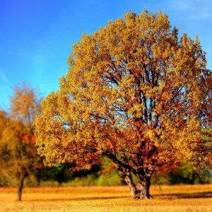 学びの秋に何を学びますか?