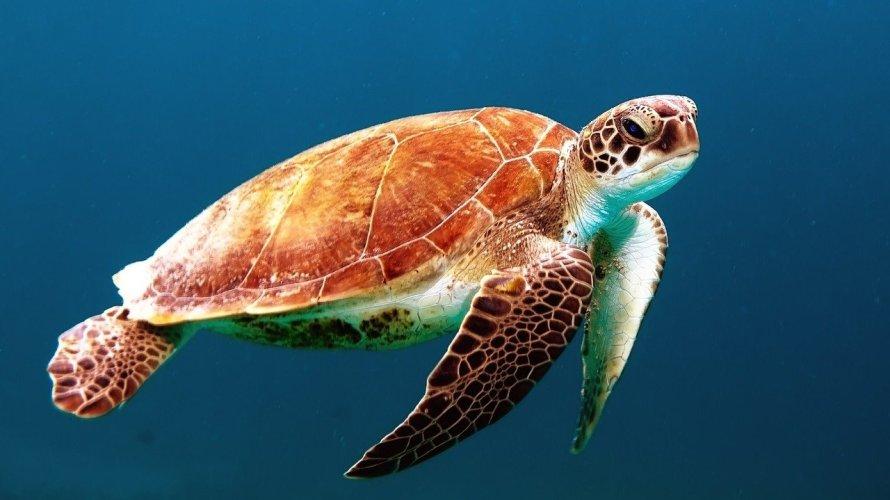 海を漂う大量のプラスチックごみ!生物が生きられない環境と絶滅危機