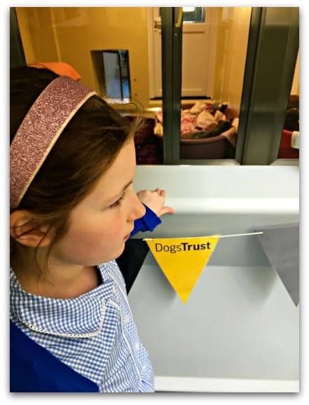 Building Children's Confidence Around Dogs with Dog's Trust
