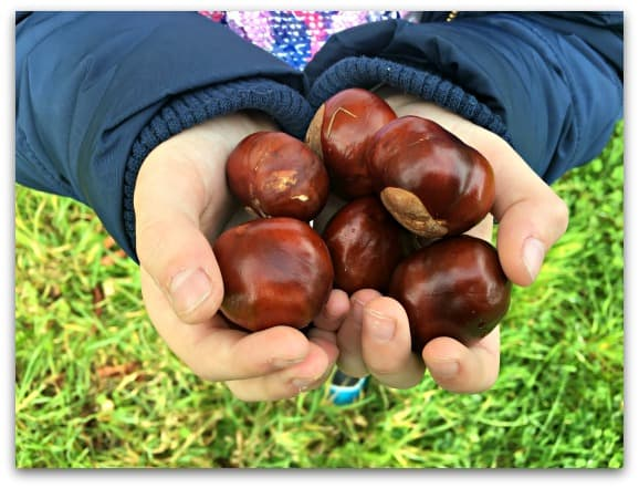 The One Where I Hope That It's True About Conkers and Spiders