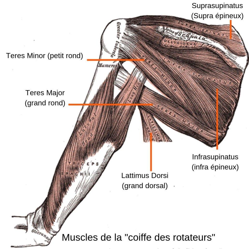 stretchingpro-etirements-epaule-coiffe-des-rotateurs