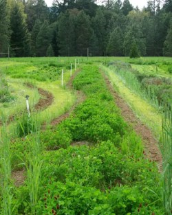 Cover Crop Seeds