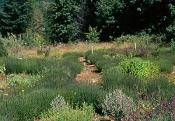 My Mothers Kitchen Garden Collection: Basil, Sweet; Cilantro; Dill; Marjoram, Sweet; Oregano, Greek; Parsley, Italian; Sage, Garden; Savory, Summer; Tarragon, Russian; Thyme, English, all Organic