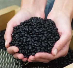 Bean, Midnight Black Turtle (Phaseolus vulgaris), packet of 30 seeds, organic
