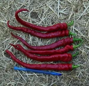 Peppers, Aji Sivri Cayenne, Dried, Whole, 50 g packet, Organic