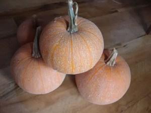 Pumpkin, Winter Luxury Pie (Cucurbita pepo), packet of 20 seeds, organic