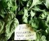 Violet, Sweet (Viola odorata), packet of 50 seeds, organic