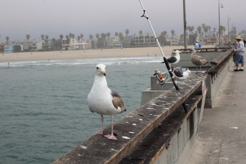 Fishing in Venice Beach