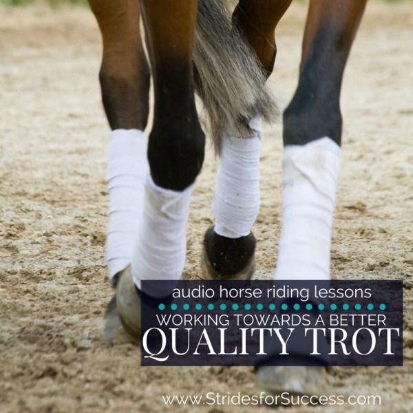 Working on a Consistently Better Quality Trot