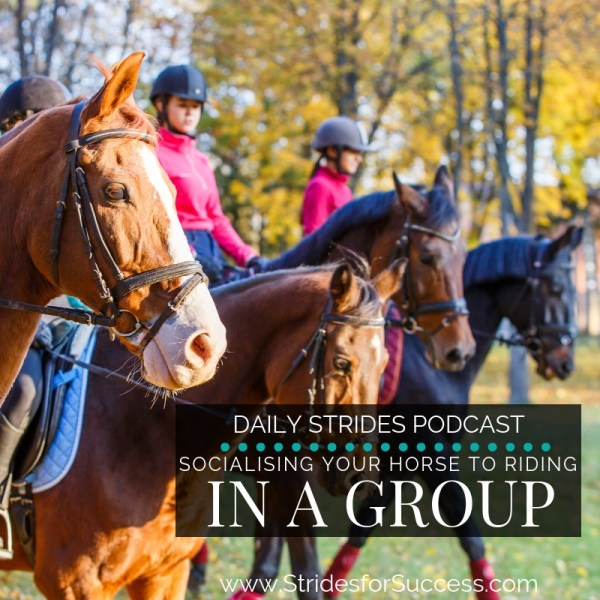 Socialising Your Horse to Riding in a Group