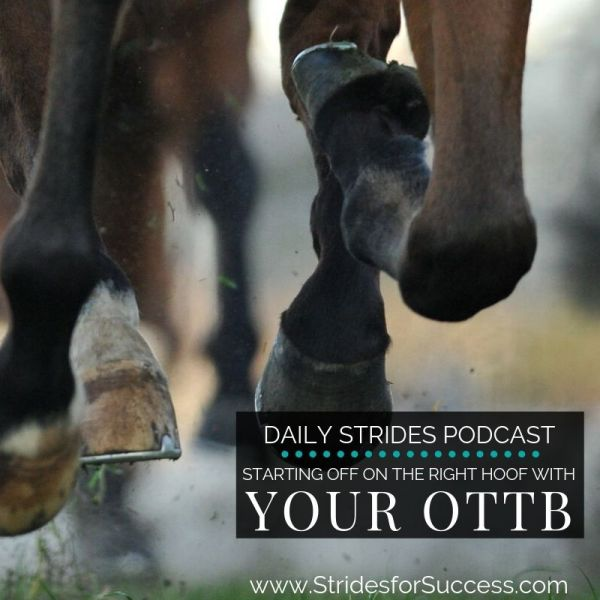 Starting Off on the Right Hoof with Your OTTB