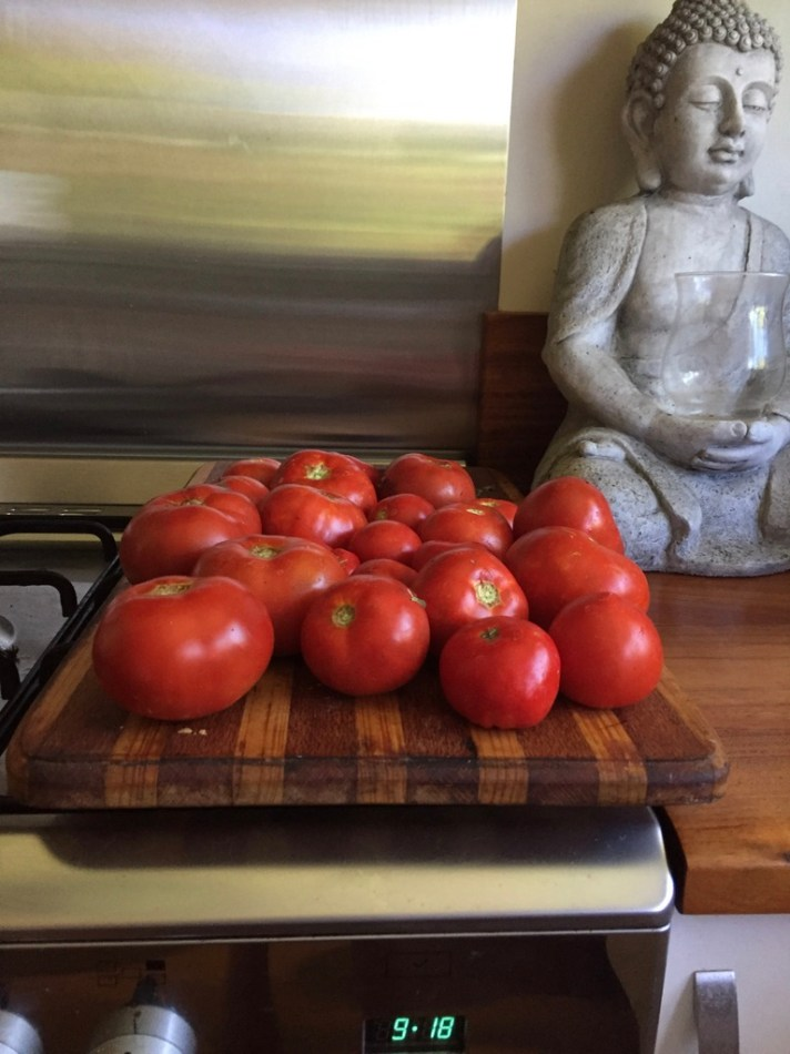 Yummy tomatoes, ready to be made into salsa.