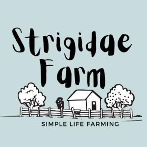 Strigidae Farm