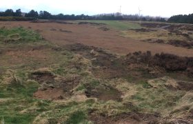 Managing gorse across UK links courses