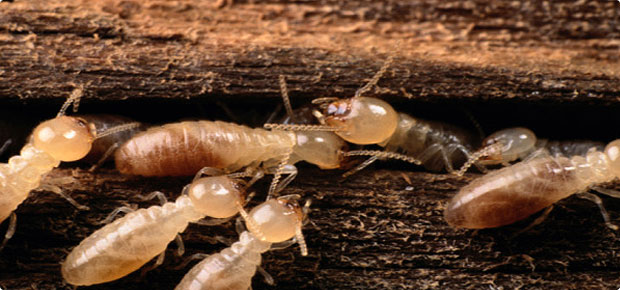 https://i2.wp.com/strikeforceservice.com/images/pic-order-termite-inspection.jpg