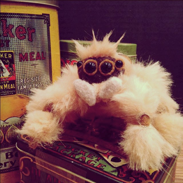 Meet Jumpy, the jumping spider.