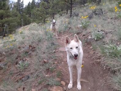 Lolo and Borage hike Mount Helena, June 2013.