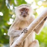 Goodmorning time for monkey business     monkeyhellip