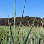 Wellfleet Wildlife Sanctuary