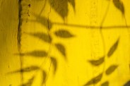 yellow wallpaper empaperat groc perkins gilman català traducció