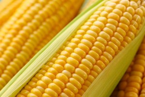 ADM Files Class Action for GMO MIR 162 Syngenta Corn Seed