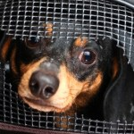 Few Protections Can Lead to Animal Cruelty Criminal Charges in SC