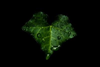 green bat_300_3-2