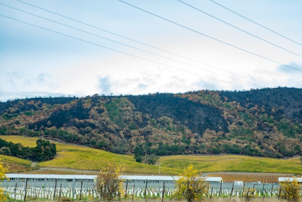 wine country wildfires