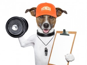 dog as trainer
