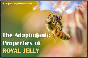 Experience the #adaptogenic properties of Royal Jelly and learn how to use it for better #health! #RoyalJelly