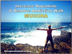 Increase dopamine and remove addiction with Mucuna! #adaptogens #addiction #dopamine