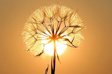 happiness quotes for women dandelion