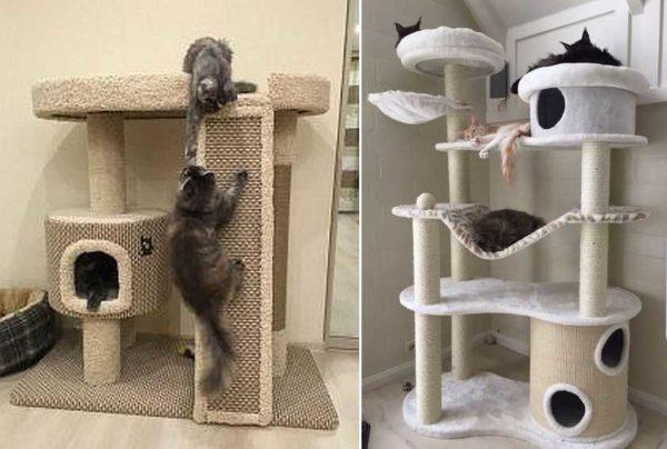 Lazalks og hængekøjer - det kan normalt lide katte