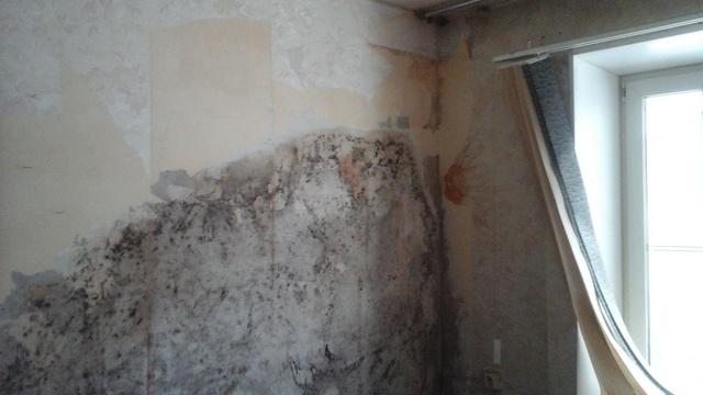 Под старыми обоями иногда могут скрываться признаки грибкового поражения стены. Естественно, ни о какой качественной отделке без предварительного «лечения» и речи быть не может.