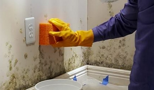 Fungus in the bathroom how to remove