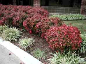 38 simple and beautiful front yard landscaping ideas