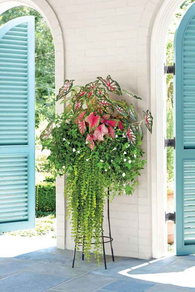 56 beautiful summer container garden flowers ideas