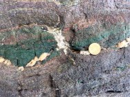 Brittle failure of an eclogitic block in a ductile blueschist matrix on Syros Island, Greece