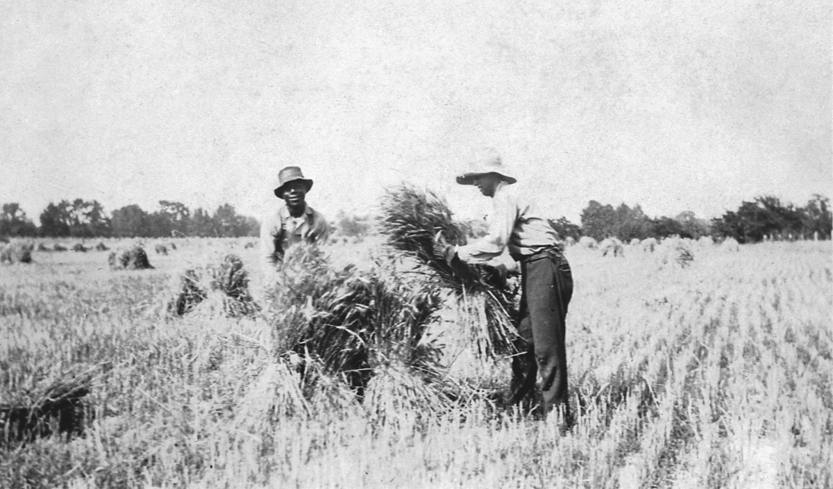 The Johnson Family: Roots on Comegys Reserve