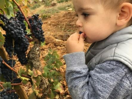Ian testing the grapes