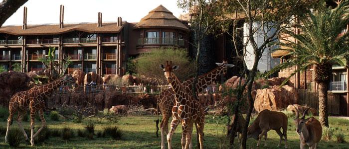 STSA 62nd Annual Meeting Hotel Options In Disney World : STSA